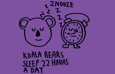 koalas 22 hours