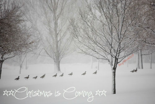 Christmas, Festive Season, White Christmas, Snow, Winter, Blog A Book Etc, Fay