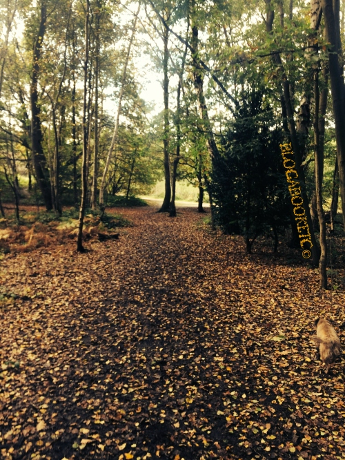 Trees, Autumn, Photos, iPhone 5, Walking, Dog Walk, Wimbledon Common, Wimbledon Village, Blog A Book Etc, Fay