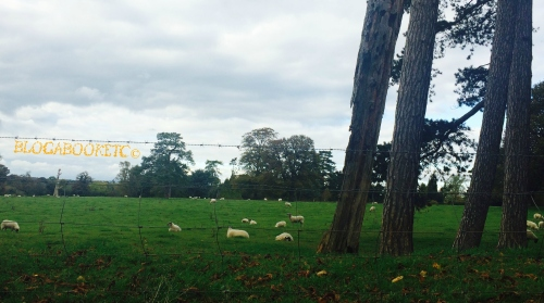 Sheep, Farm Animals, Animals, Country, Life, Autumn Drive, Autumn, Community, Country Life, Blog A Book Etc, Fay