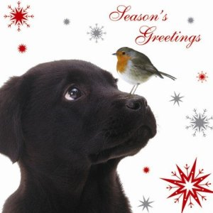 Labrador, black labrador, amazon, greeting cards, christmas cards, cards, christmas, blog a book etc, fay